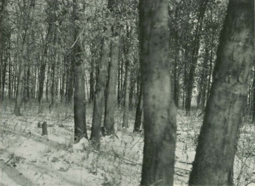 Crow Island 1921